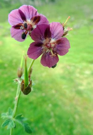 15 - Une Jolie Fleur (4)