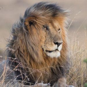 4 - La Légende Du Roi Lion (1)