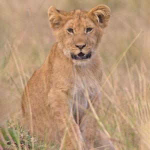 4 - La Légende Du Roi Lion (3)