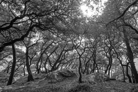 Bois De La Chaise